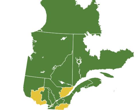 Covid 19 Quebec Deploie Un Systeme D Alertes Et D Interventions Regionales